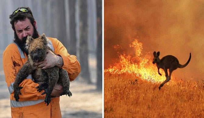 Nearly three billion animals killed or displaced by Australia's fires